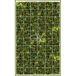 Panneau solaire BISOL SPECTRUM BMU-250 Vert